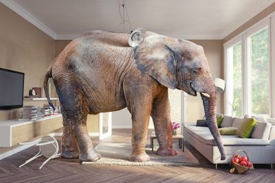Social Security: The Elephant in the Room
