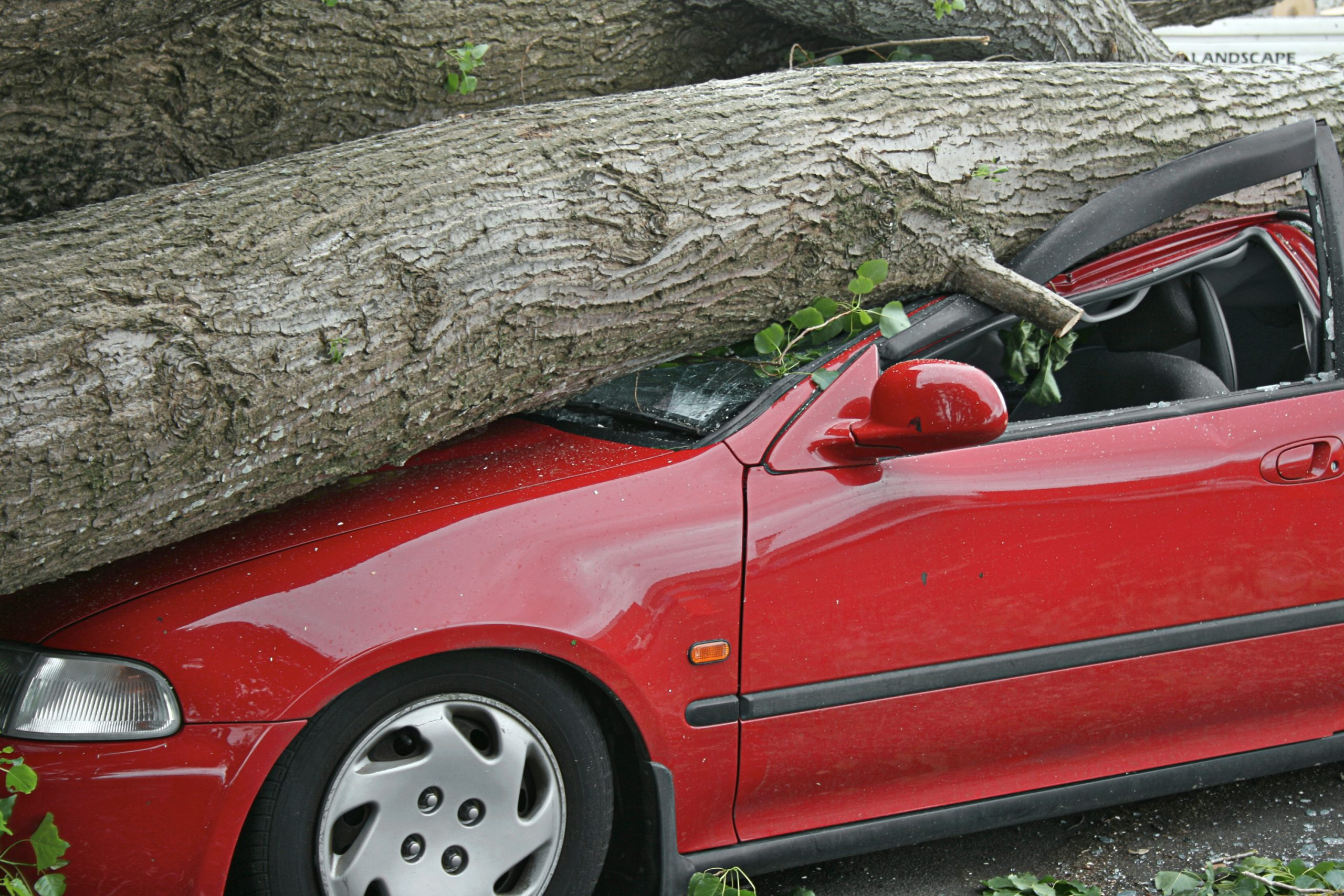 Fallen Tree Damage—Who Pays? WMG
